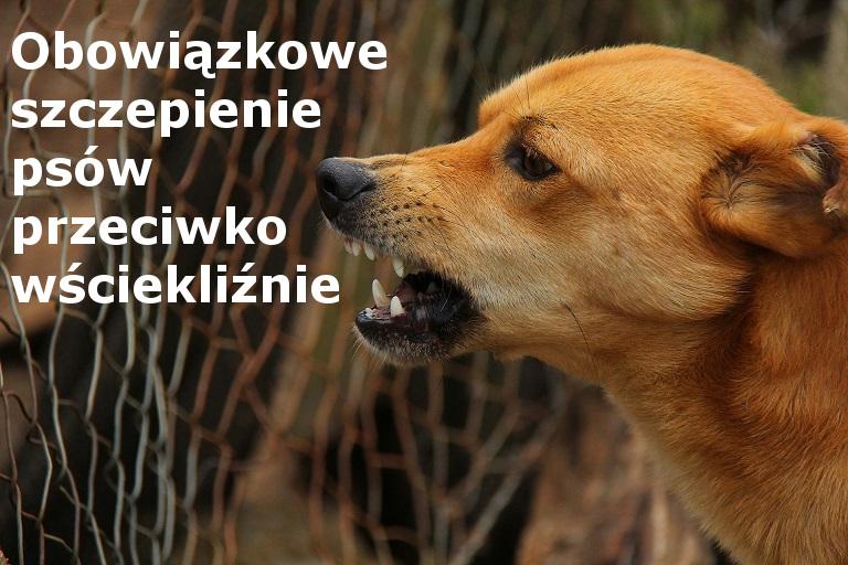 plakat- szczepienie psów